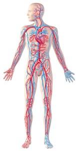 12 причин нарушения кровообращения