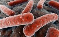 bakterialnyi-uretrit