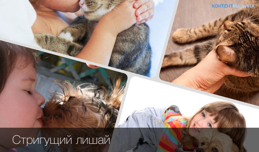 Попадание кошачьего волоса в организм человека