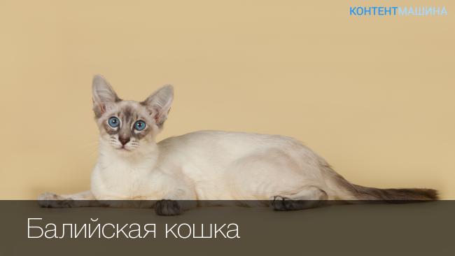 От каких котов нет аллергии